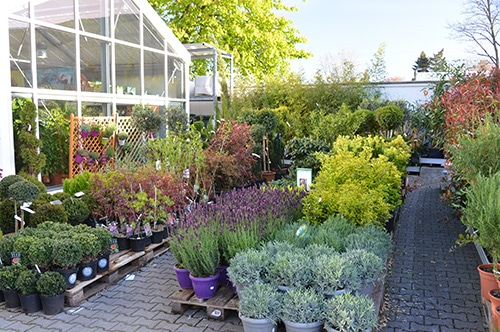 Farbenkrauth – Pflanzen