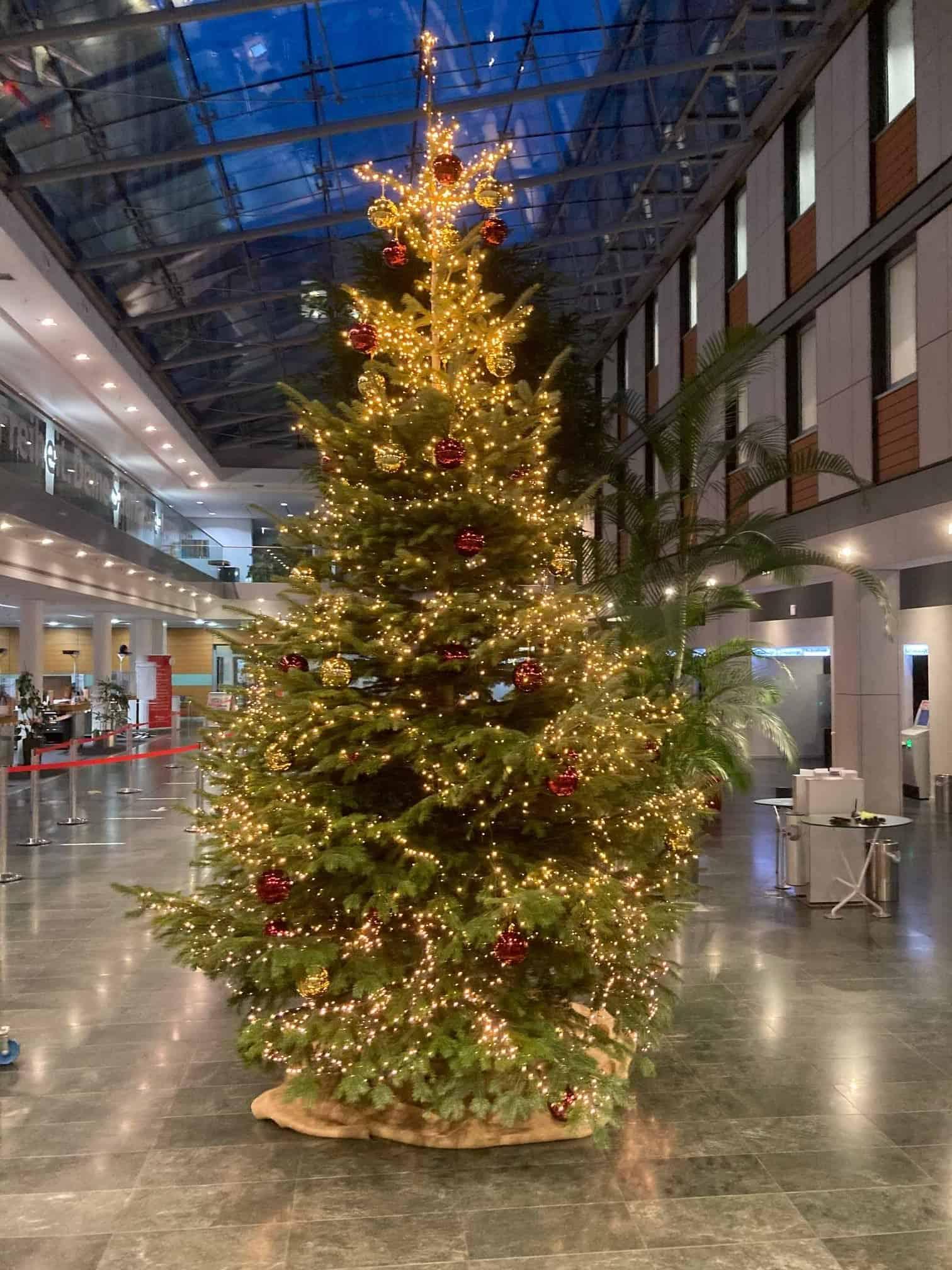 farbenkrauth stellt Weihnachtsbaum in Sparkasse am Luisenplatz in Darmstadt