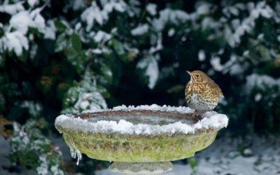 Naturschutz im Garten: Was im Dezember wichtig ist