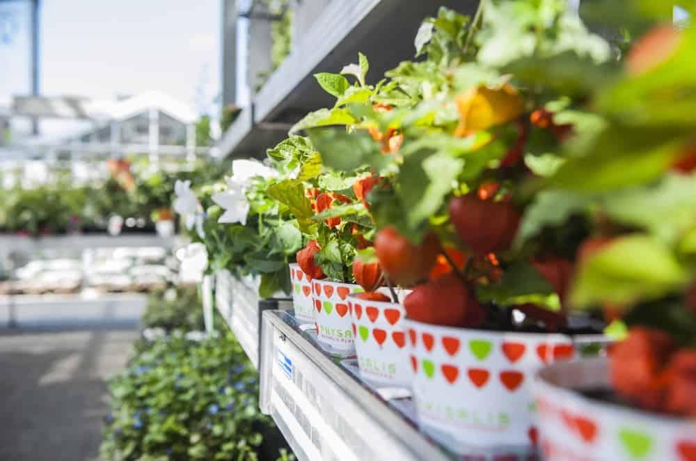 In Ihrem farbenkrauth Gartencenter blüht Ihnen nur Gutes