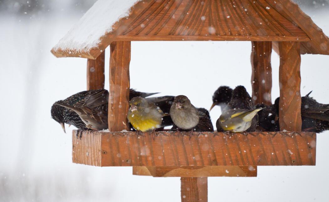Naturschutz im Garten: Was im Januar wichtig ist