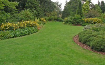 Wer Wert auf einen schönen Rasen legt, muss ihn auch entsprechend pflegen.