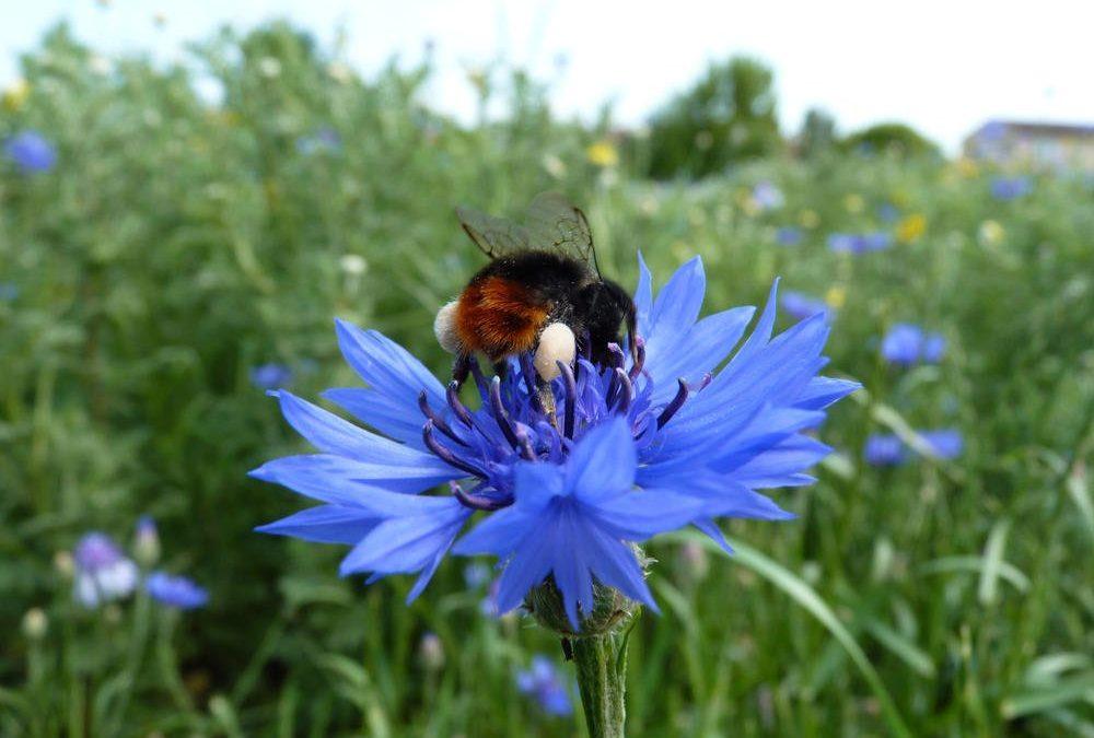 Naturschutz im Garten im September